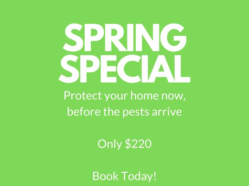 spring pest control